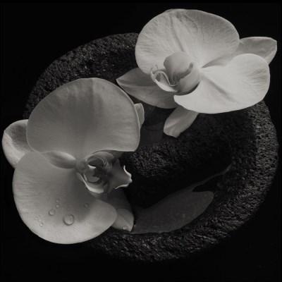 دانلود آلبوم Corpse Flower اثر Mike Patton