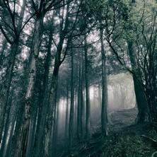 آلبوم In the Dark Woods اثر Akira Kosemura