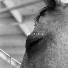 آلبوم Nectarine اثر Funeral Advantage