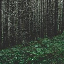 آلبوم Contingencies اثر Mikael Lind