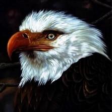 دانلود آلبوم موسیقی The Hawk Is Howling