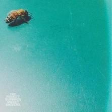 دانلود آلبوم موسیقی Sweet Shivers