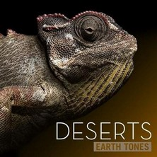 آلبوم Deserts اثر Earth Tones