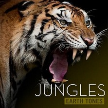 دانلود آلبوم موسیقی Jungles