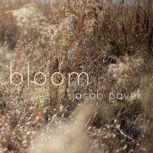 دانلود آلبوم موسیقی Bloom