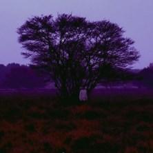 دانلود آلبوم موسیقی Cedric-Vermue-Ember-EP