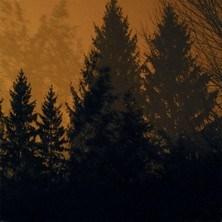 آلبوم Above the Earth, Below the Sky اثر If These Trees Could Talk