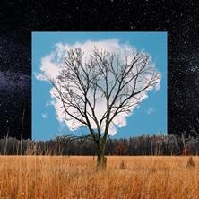 آلبوم Bloom Innocent اثر Fink